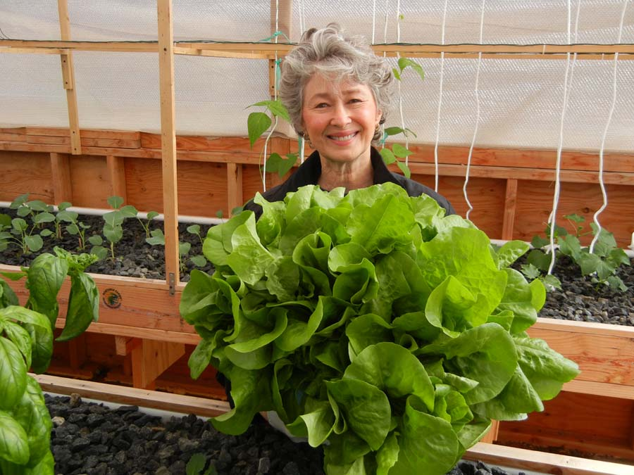 Nell work aquaponic for sale details for Aquaponics systems for sale